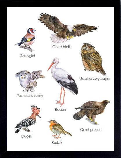 plakat zwierzęta leśne montessori