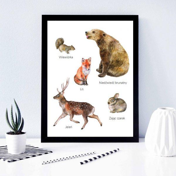 plakat montessori zwierzęta leśne
