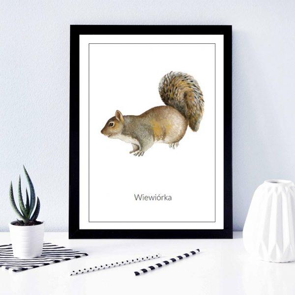 plakat wiewiórka